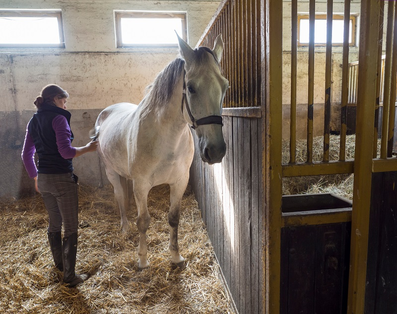 how to reduce horse tranpsort stress, hwo to lower horse's travel stress, how to relax your horse during transport