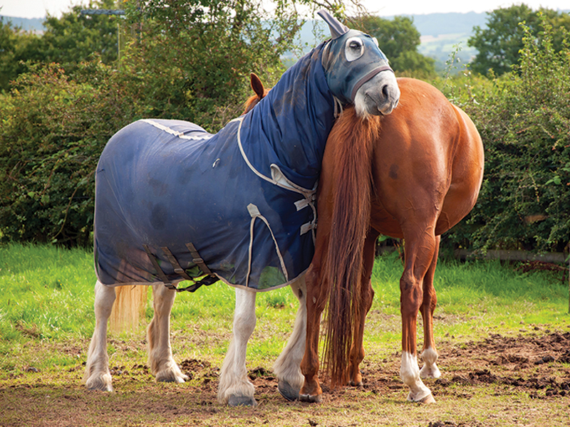 Does how often should the vet see my horse? How often should the farrier see my horse? how to deworm horse, when to vaccinate horse, preventing sweet itch horses, how much water horse need, steve chiasson