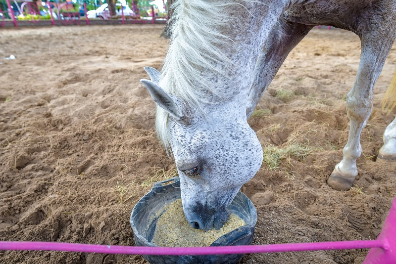equine organic, natural equine, horse organic feed, should i feed my horse natural foods, shelagh niblock, horse evolution