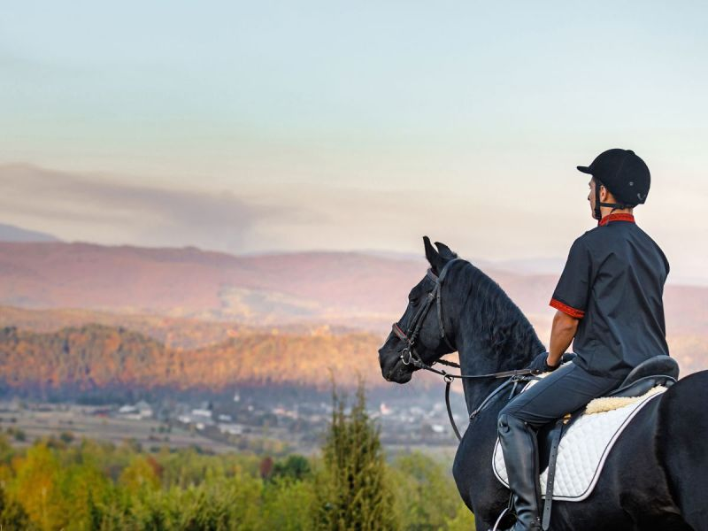 be a better horse rider, laura king equestrian, run an equestrian centre, manage horse business