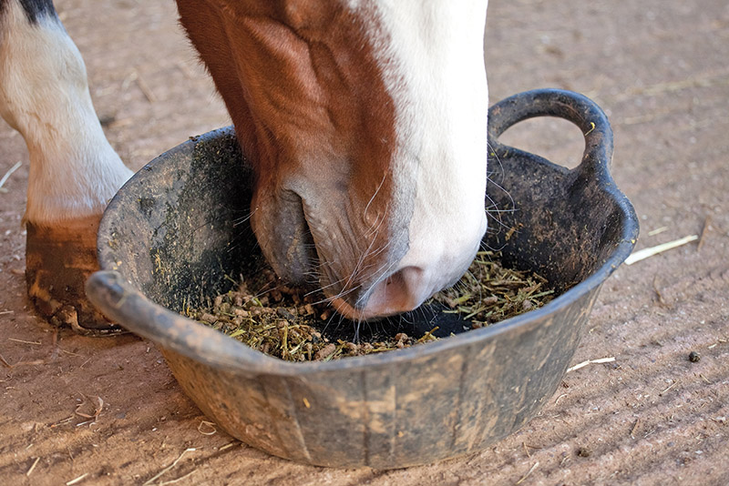 horse meal timing, importance of horse mealtimes, Feeding for equine foregut health, Feeding for equine hindgut health, performance horse mealtimes