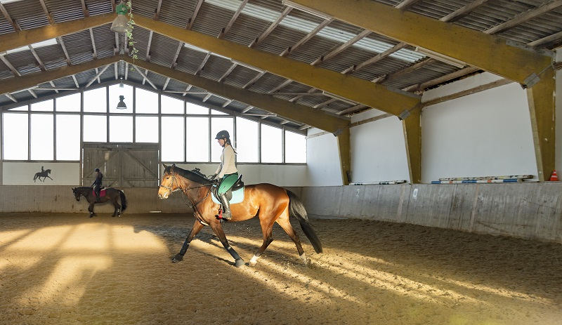 horse riding accidents, should i wear a riding helmet, how to safely ride a horse, gear for horse riding, beginner rider equipment, concussion horse riding, insurance for horse riding
