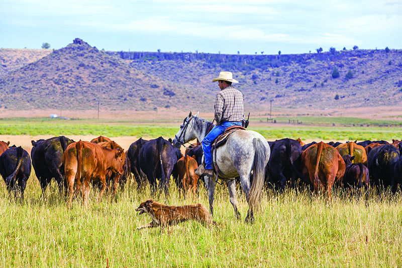 introduce dog horse farm, horses and dogs, the horse listener, herding dogs and horses, working dogs and horses