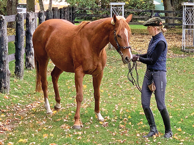 equitation science, how to horses learn, learning theory horses, tania millen, international society for equine science ises