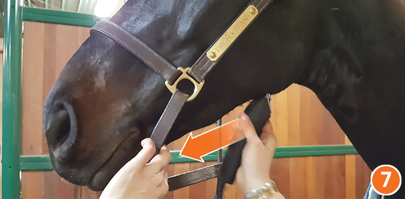 how to properly clip your horse's face, how to clip horse's Bridle, path, how to clip horse's legs