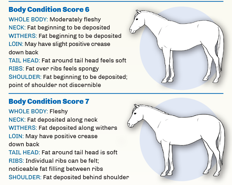 hores body condition scores horse, Reconditioning Horse, spring horse riding, get a horse fit, horse feed change, equine fitness, horse exercise, overworked horse