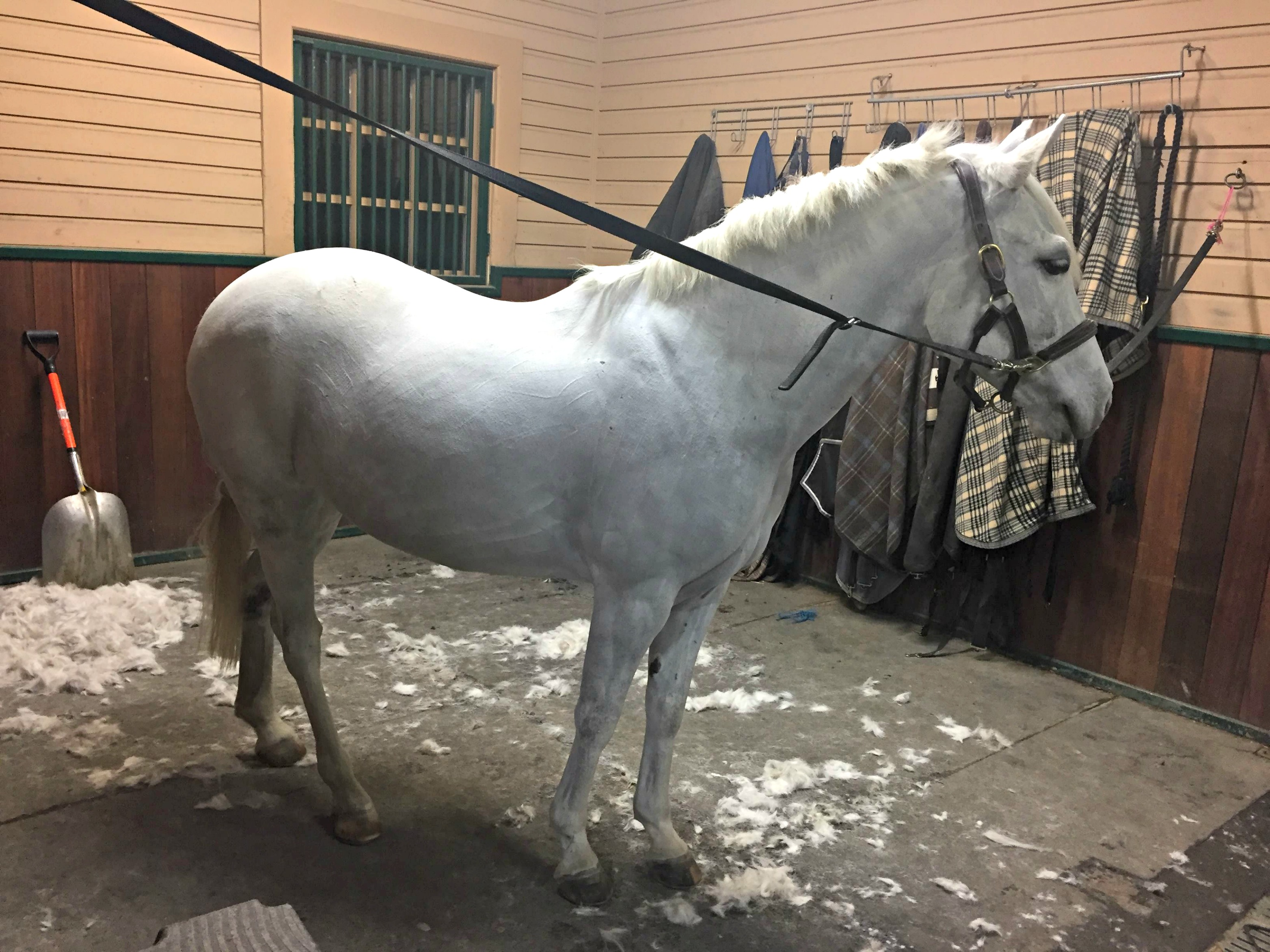 do you clip your horse in winter?