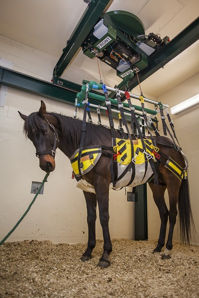 barbaro rehabilitation, barbaro treatment, equine rehabilitation, horse boken bone, broken leg horse, western college of veterinary medicine, wcvm