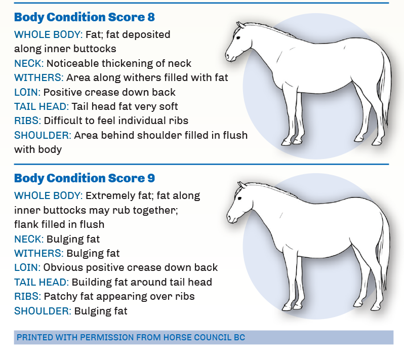 Reconditioning Your Horse After Winter Horse Journals