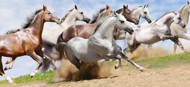horsejournals.com about us page