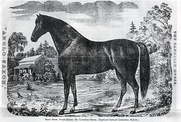 Woodcutting of Canadian Horse in the 1850s