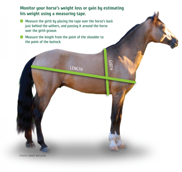 15h horse weight loss
