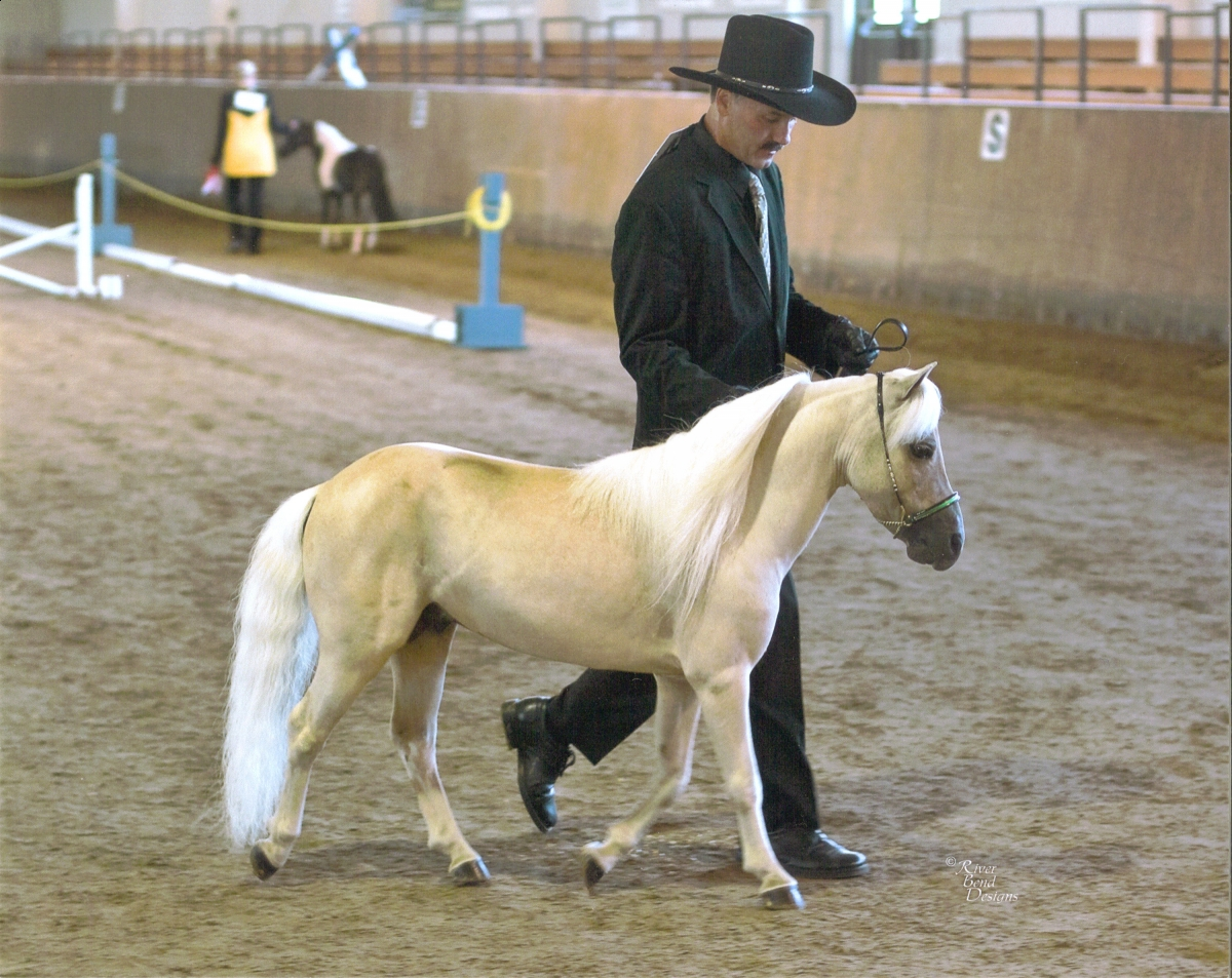 The Magnificent Miniature | Horse Journals