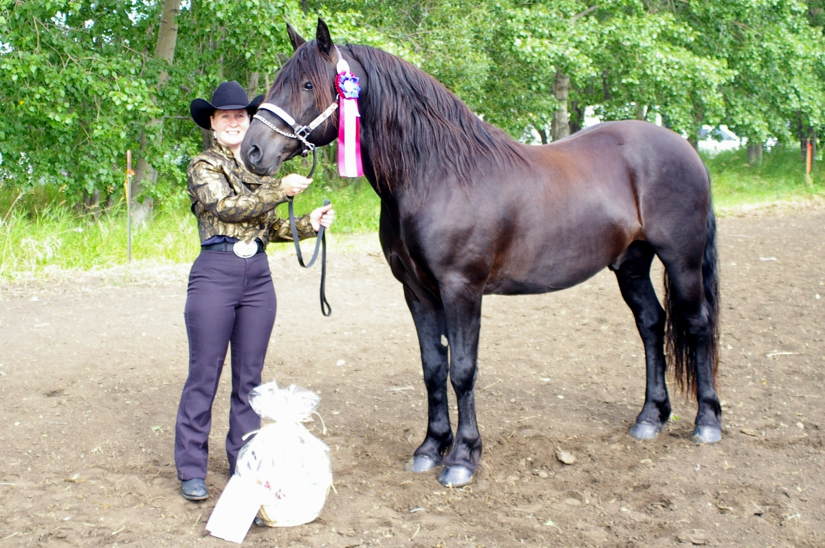 Canadian Horse breed standard