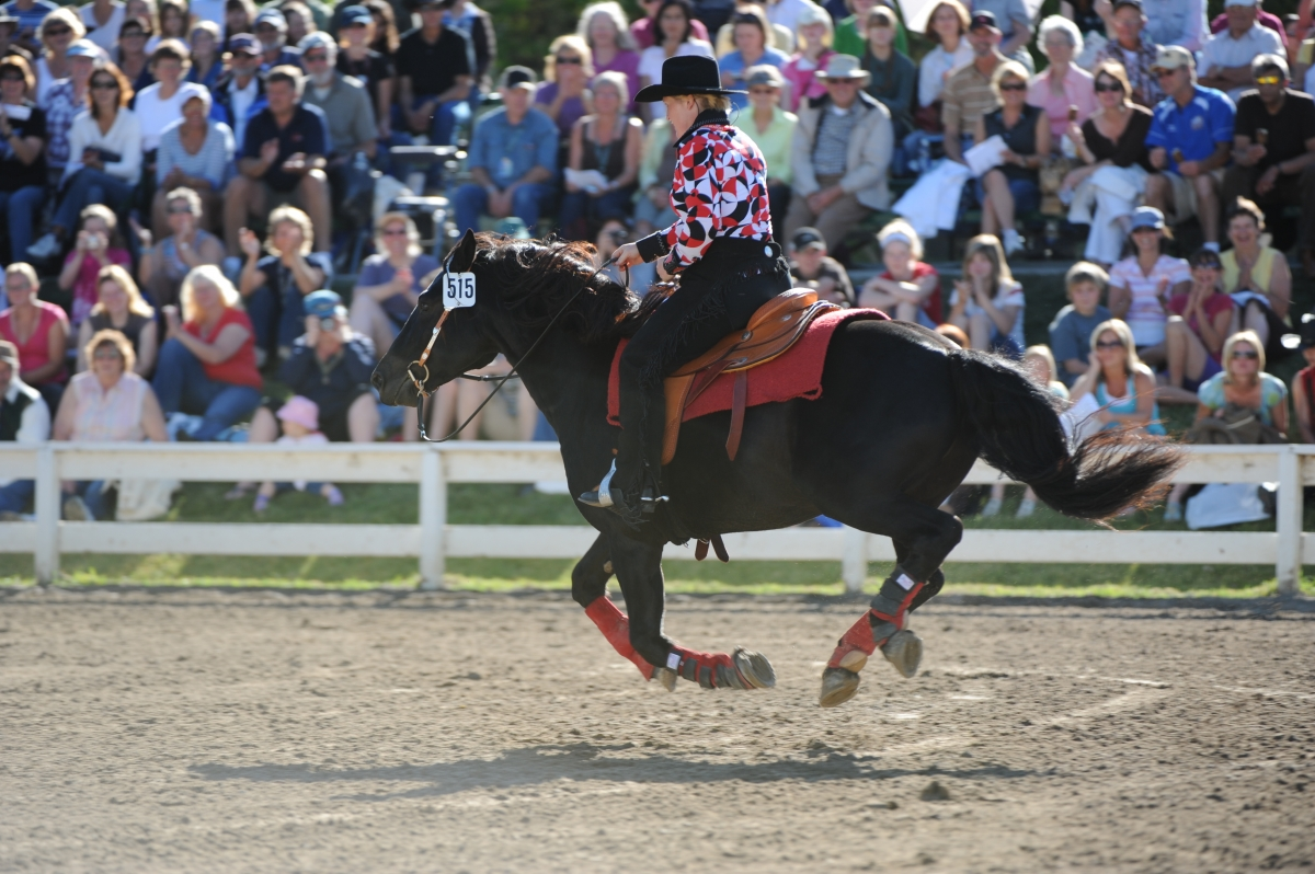 Competing in Western Events Reining Gymkhana Trail & Western pleasure