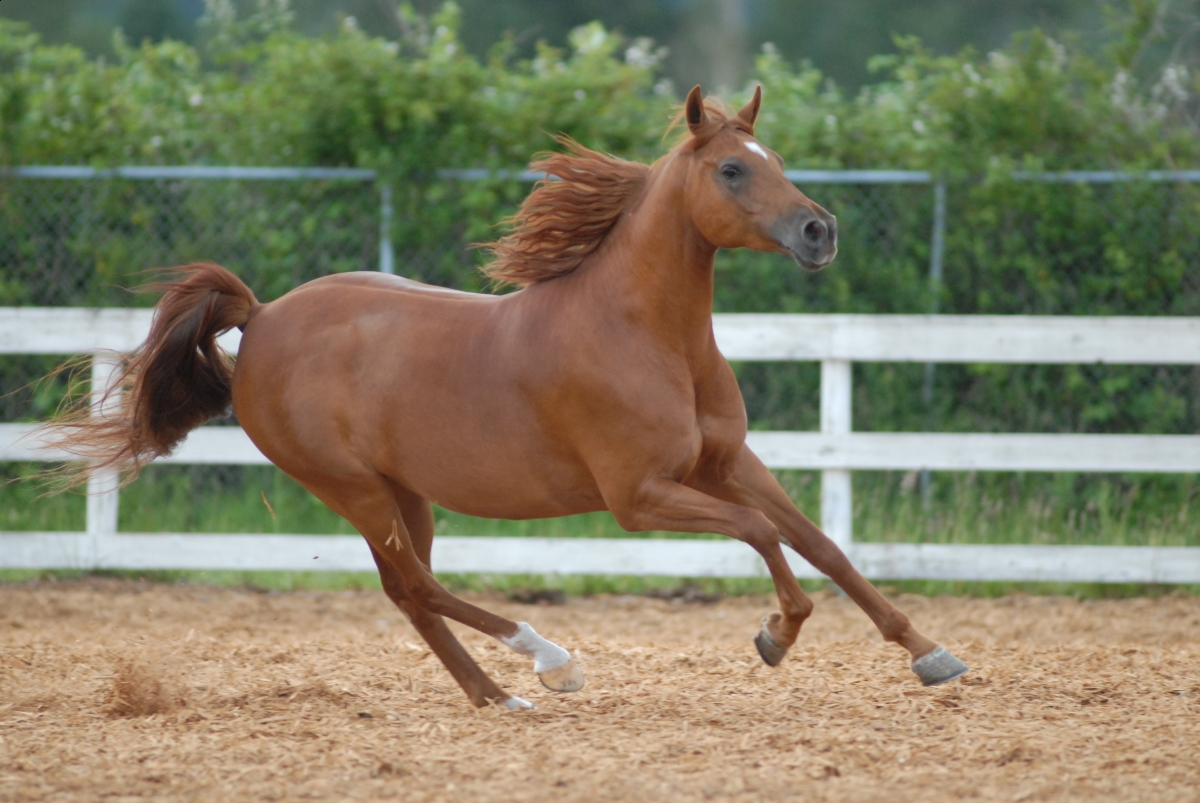 overcoming horse tension, equine stiffness, equine tension, will clinging