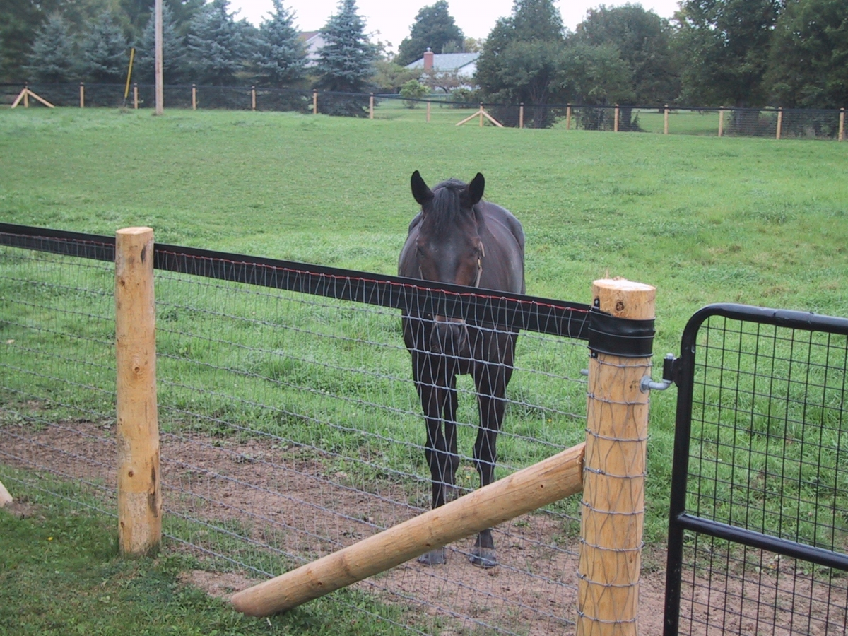 Safe Amp Effective Fencing Options For Horses Horse Journals