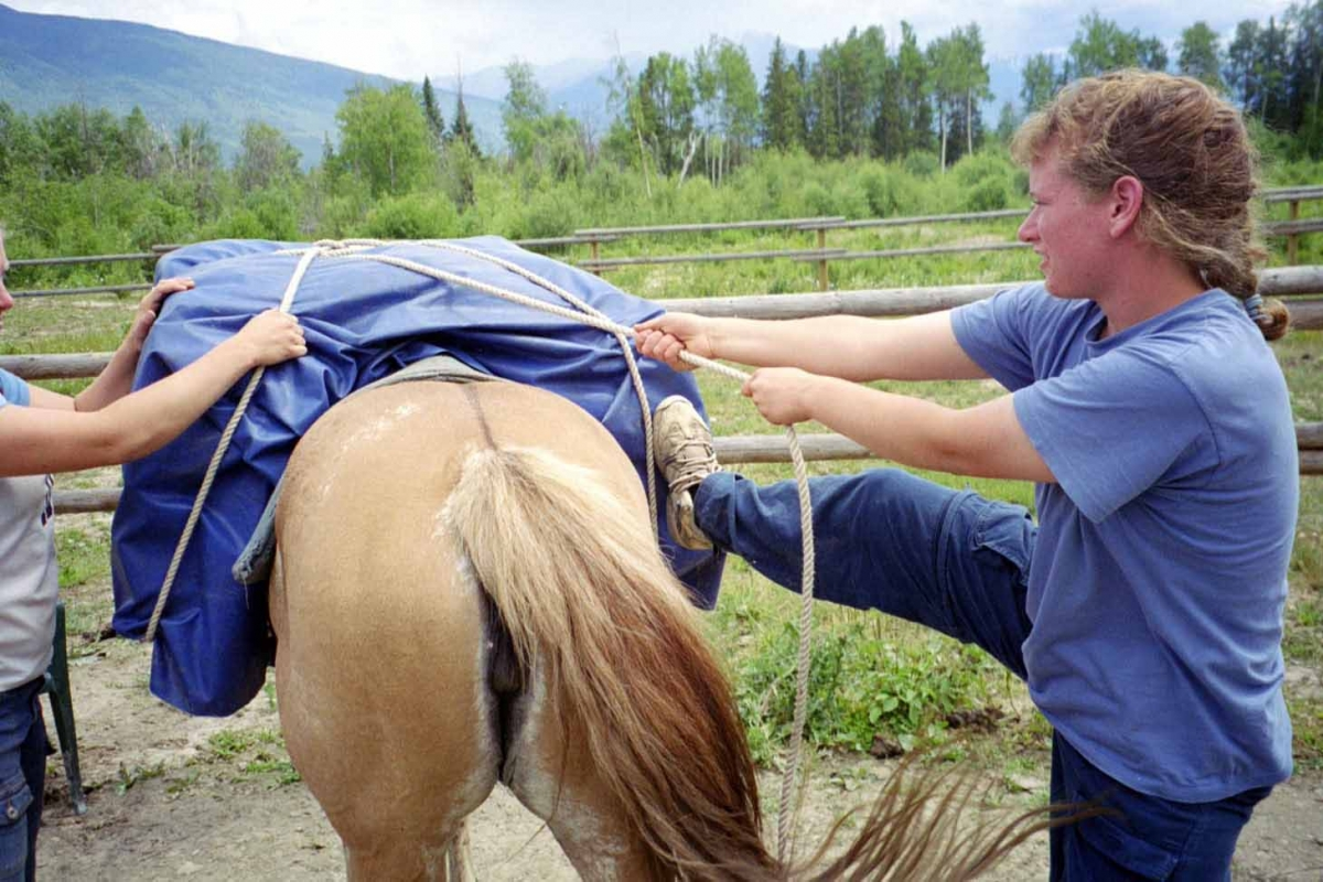 Hitching a Pack Horse, trail riding tips, types of horse htitches, single diamond horse hitch
