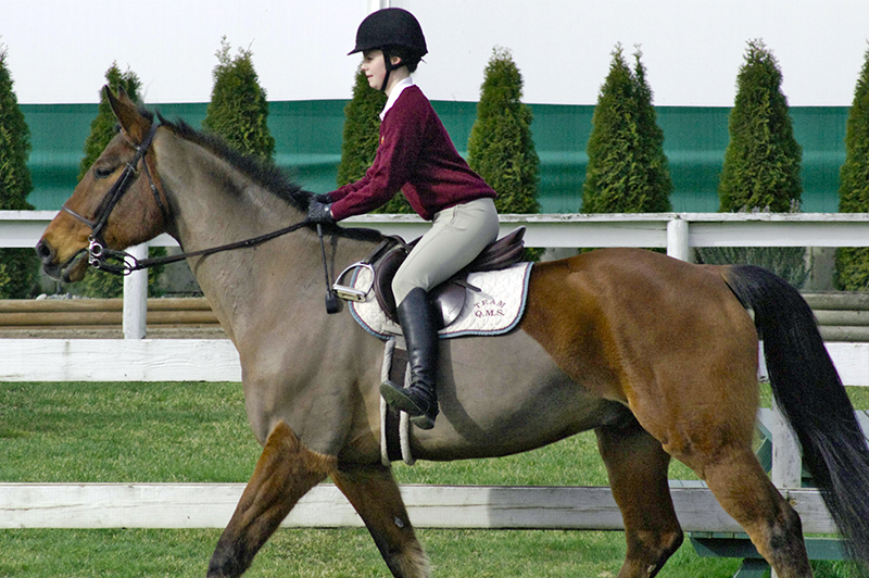 Riding without stirrups, rider position, horse riding, two point trot, two point walk, posting trot, equine sitting trot, riding position