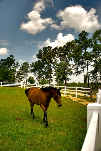 training jonathan field, natural horsemanship, trailer loading, load a horse trailerbuilding a horse fence, equine fence, fencing equestrian property, fencing acreage, how to build a fence for horses