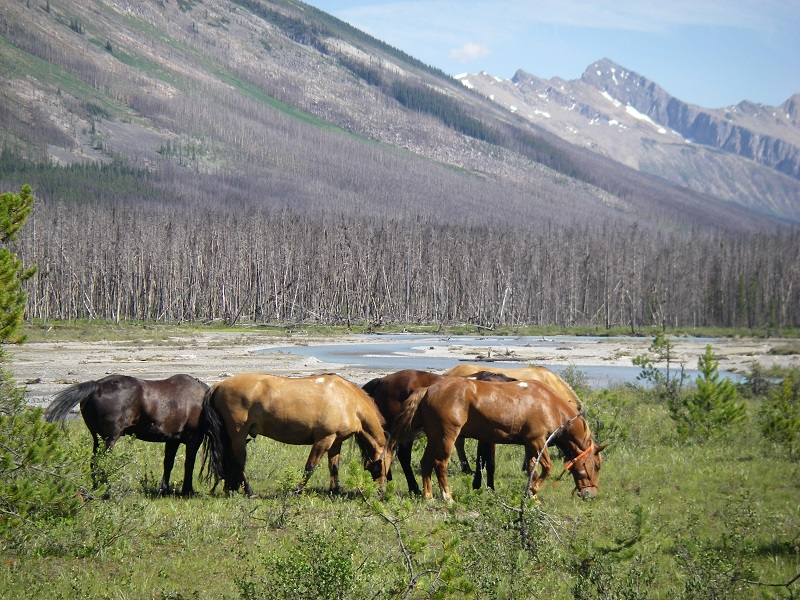 rocky mountain trail rides, mountain trail rides, holiday with horses, holiday horse ride, blue creek outfitting, trail riding, tania millen, Crown Creek, holidays on horseback