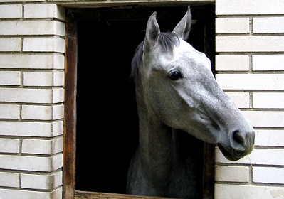 horse looking out window