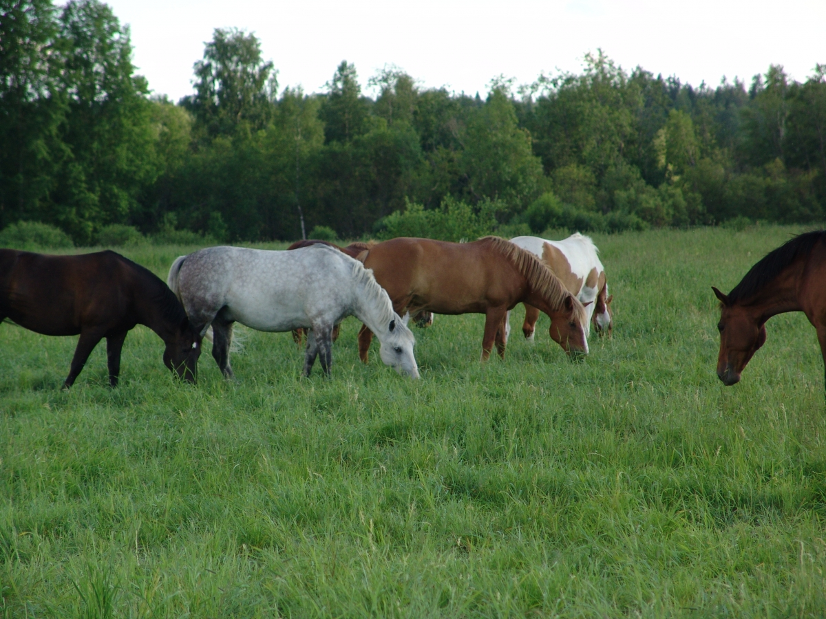 Working Your Horse Property Plan | Horse Journals
