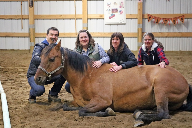 Equine Connection Academy Equine Assisted Learning Kari Fulmek Equine Connection learning with horses equine therapy horse therapy