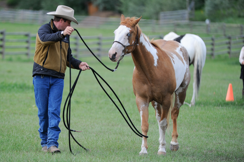 Jonathan Field, natural horsemanship, Leg Shy Horse, claustrophobic horse, connect with shy horse, rope leading horse, get horse to direct steer, horse leading by his feet, horses working cows