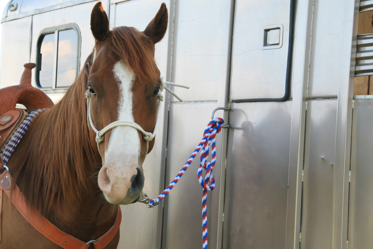 Lindsay Grice, Horse Show Safety, equine show safety, horse safety