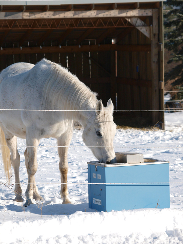 De-icing water buckets for horses,  assess your horse barn's structural integrity, dust control in horse barn, mud management for horses, ventilation for horse paddocks and barns, heated horse tack room