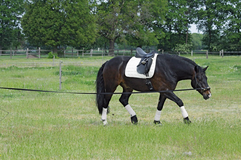Jochen Schleese, saddle fitting a growing horse, saddle fit colt, saddle fit filly, saddle fit young horse, horse lameness, horse back pain, equine back pain, equine injuries, equine lameness, horse saddle fit