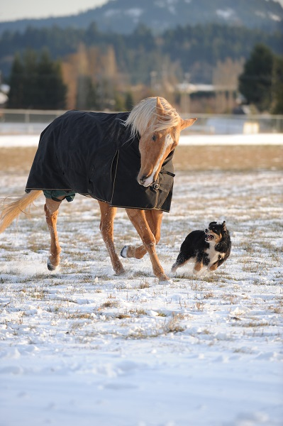 winter horse, riding in winter, training in winter, conditioning horse, keep horse fit winter, horse stretches, carrot stretch