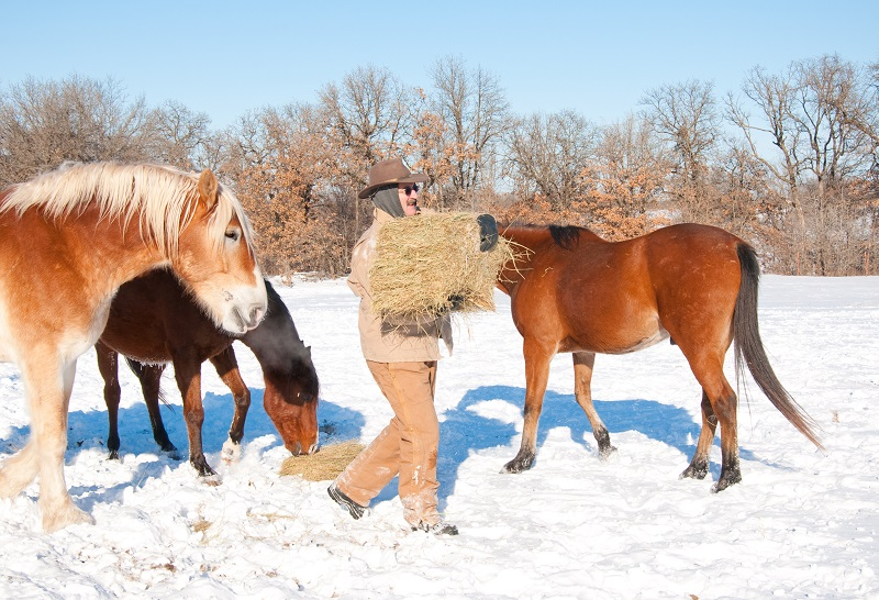 caring for horse winter, outdoor horse, winter equine management, horse nutrition winter, equine guelph management of equine environment course, equine colic, horse shelter winter, heated water horse, winter footing horse
