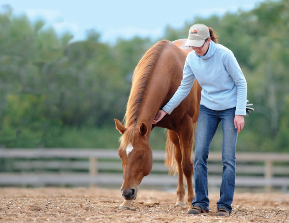 equine first aid, horse choking, horse wound, equi-health, horse first aid