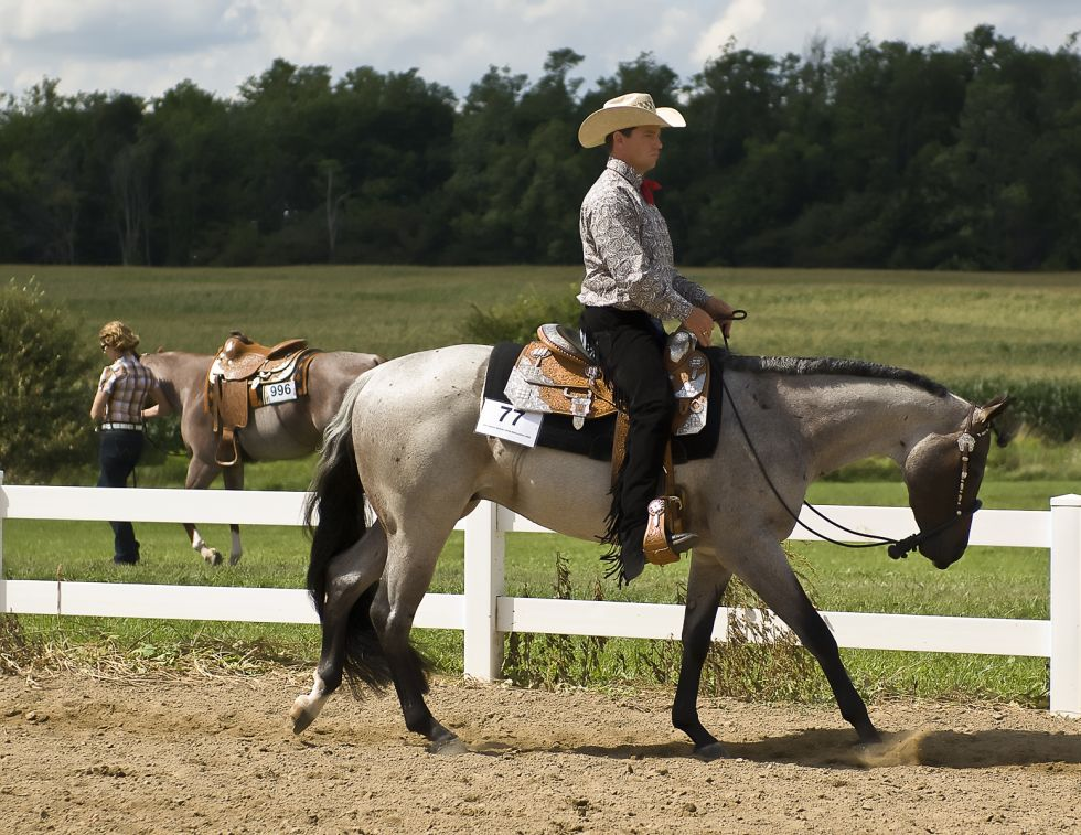 Shaping Your Horse's Canter