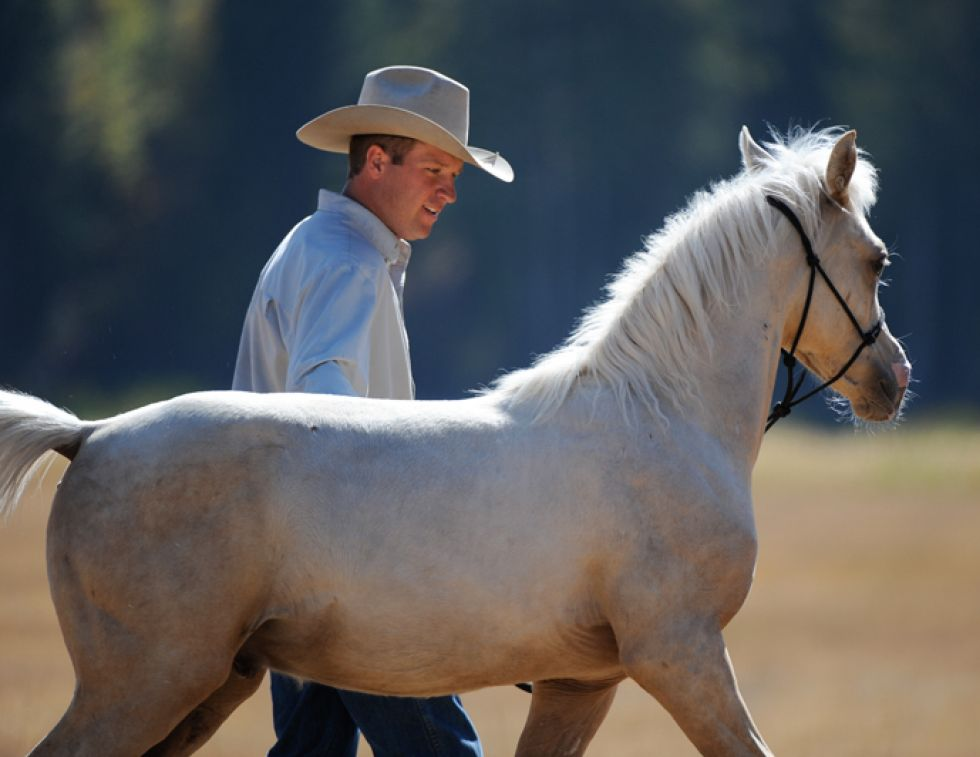 Jonathan Field, training Foals, training horse Weanlings, Yearlings horse training, natural horsemanship, western horse, english horse