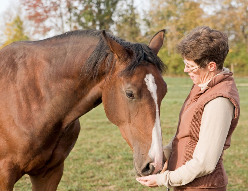 equine gastric ulcers, equine oral supplements, horse supplements, horse nutraceuticals, equine nutraceuticals. Shelley Nyuli, Sciencepure Nutraceuticals, Ralph Robinson, Herbs for Horses, equine joint, equine digestion