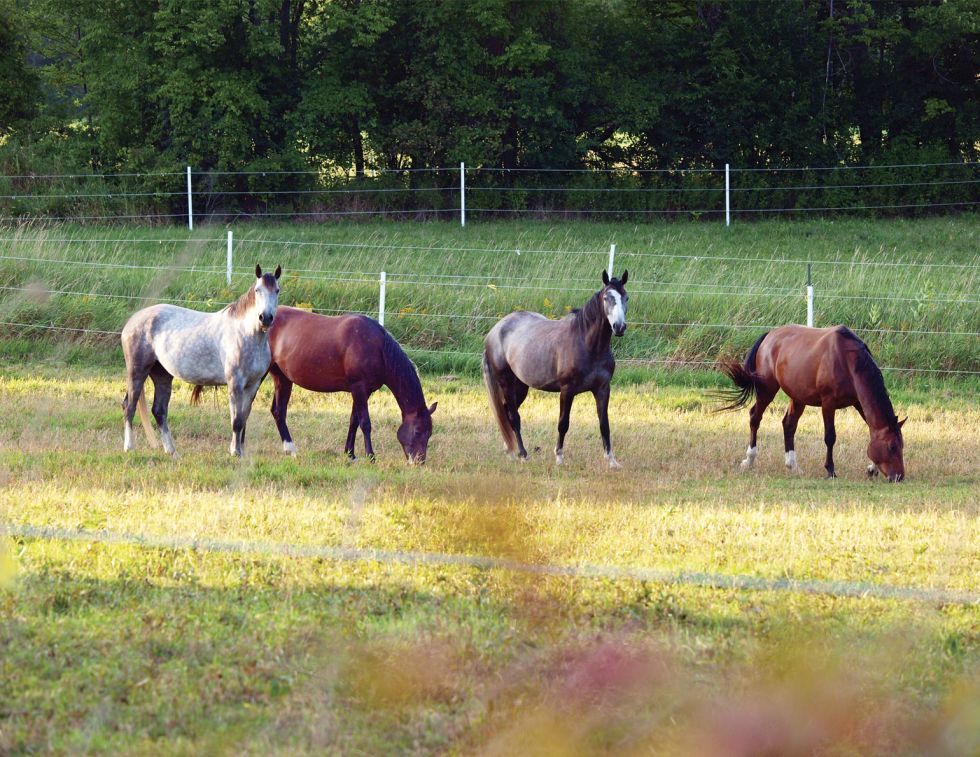 penn state extension equine team, rotational grazing horses, managing horse pastures, sacrifice lot horse grazing