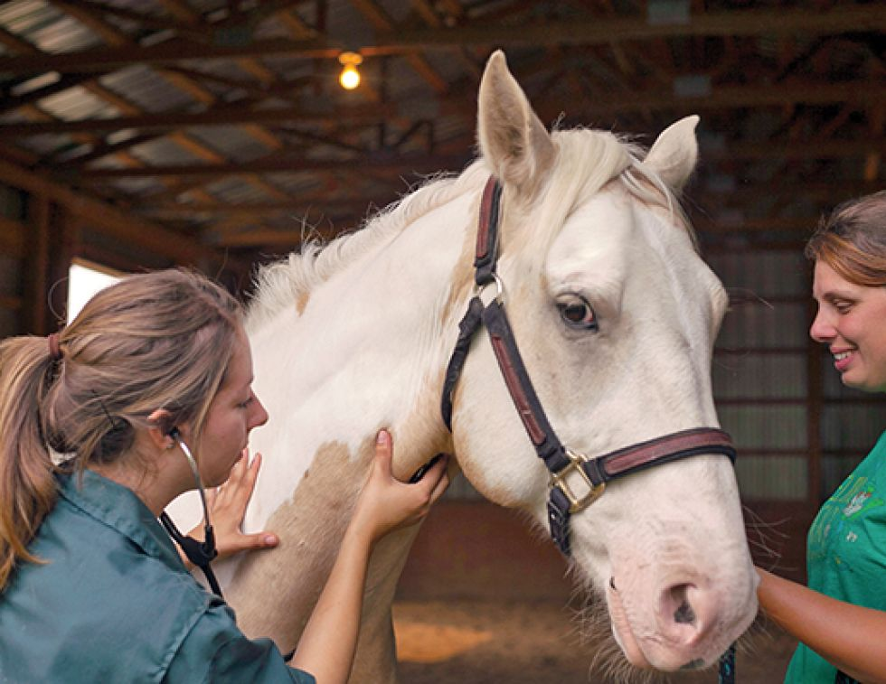 Western College of Veterinary Medicine WCVM horse bacteria equine asthma, equine chronic obstructive pulmonary disease (COPD), horse heaves