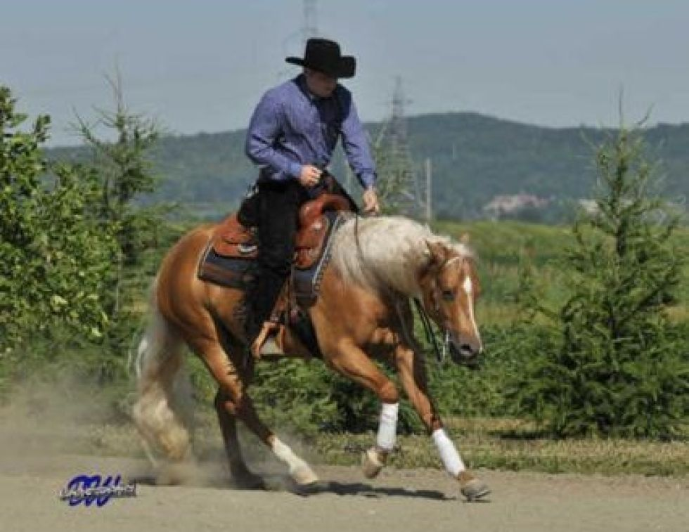 Matthew Hudson explains collection for the reining horse