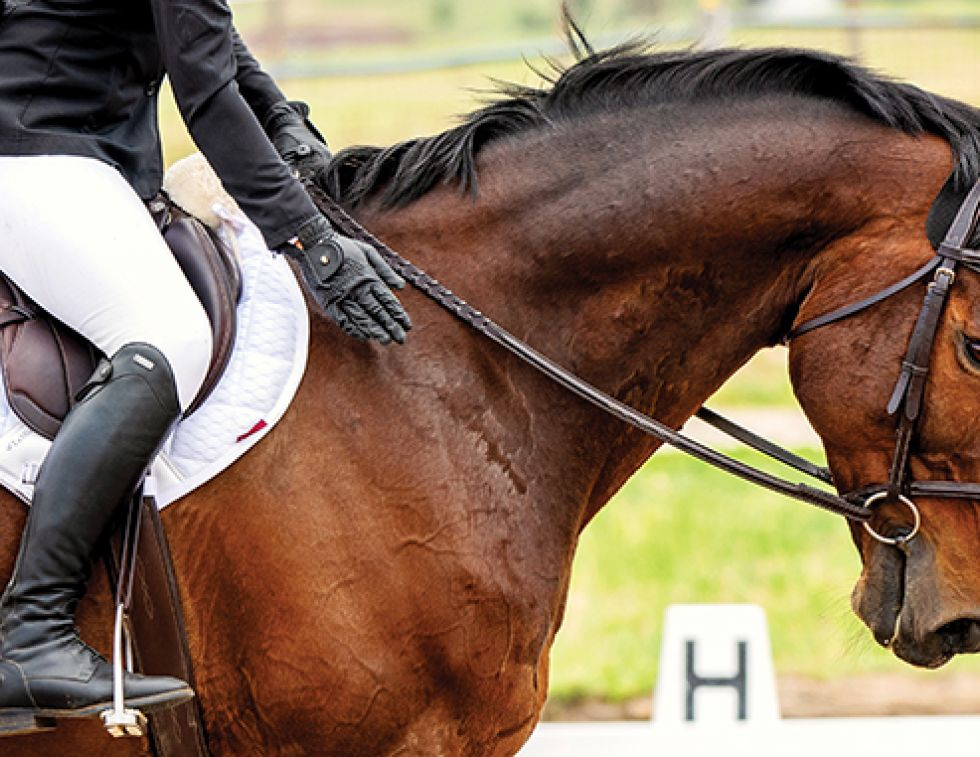 lindsay grice, preparing for a horse competition, psychology of riding horses, helping an anxious horse, horse refuses, horse won't cooperate