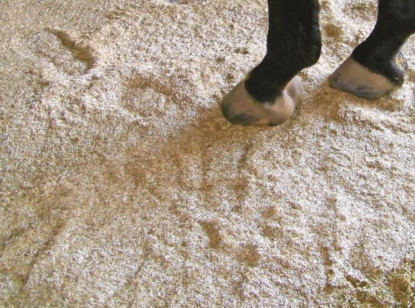 primebed, cascade hay, horse bedding canada, flax seed equine