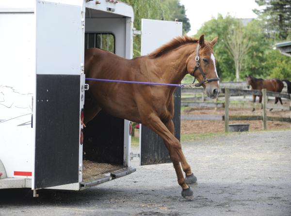 training jonathan field, natural horsemanship, trailer loading, load a horse trailer