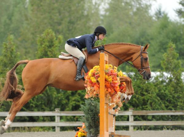Riding without stirrups, rider position, horse riding, two point trot, two point walk