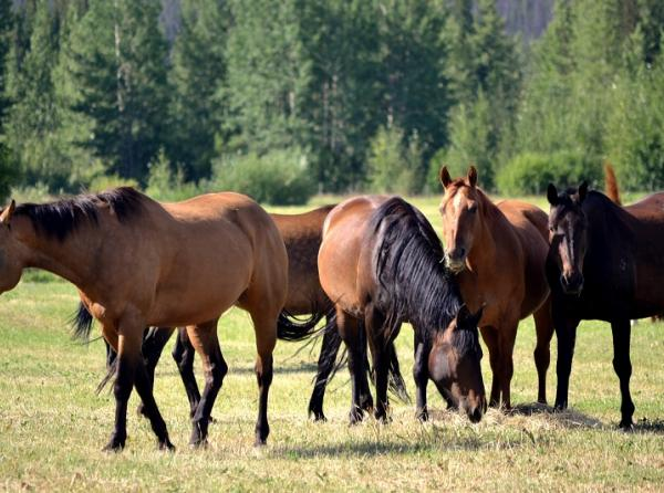 Big Creek Lodge, horseback riding bc, horse holiday chilcotin, riding vacations, horse vacations, chilcoting riding holiday