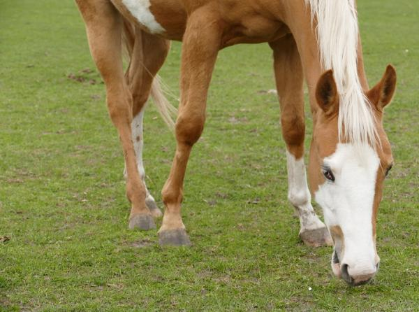 Care & Feeding of Overgrazed Horse Pastures, overgrazing horses, Horse Pasture Maintenance