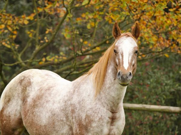 Selenium equine diet purina horse selenium deficiency selenium antioxidant horses vitamin e horses concentrated feeds selenium horse feeds