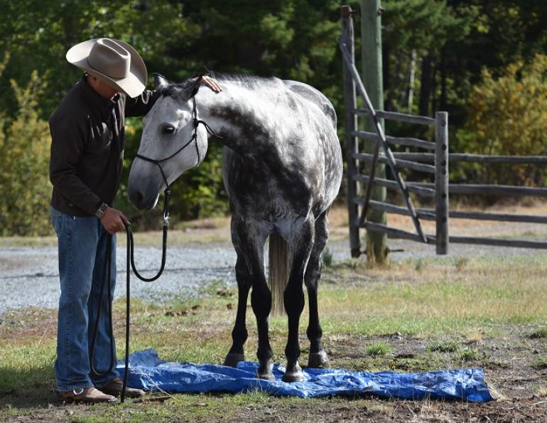 jonathan field natural horsemanship horse tarp training natural horsemanship equine tarp training