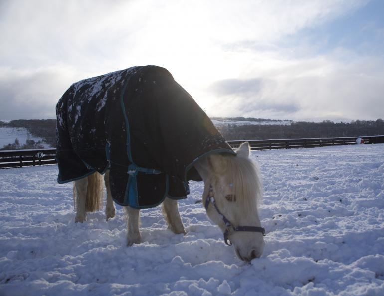 hydration horses winter, how to water horse winter